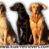 KIAK Retrievers
